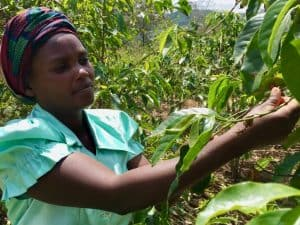 Bèkske coffee, rwandan coffee, specialty coffee, empower, Rwanda